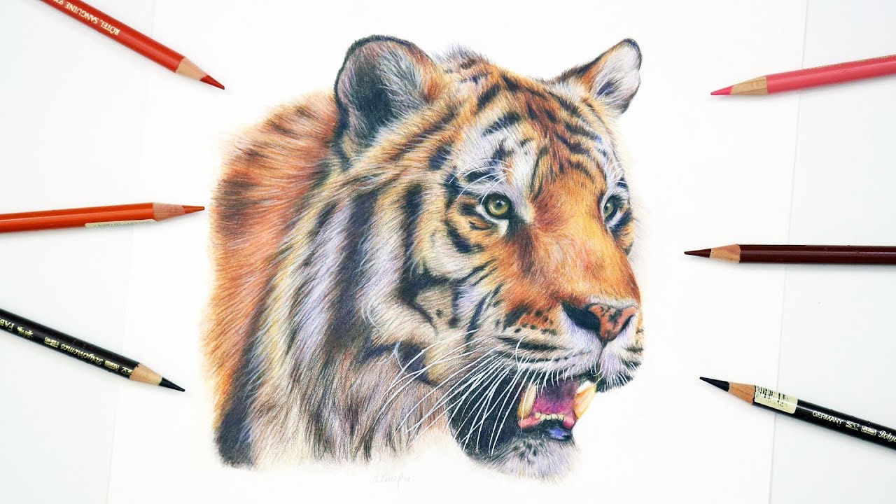 How to draw a realistic tiger colored pencil tutorial