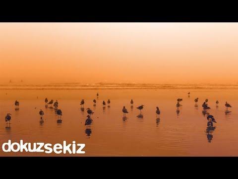 Cihan Mürtezaoğlu - Saf Kuşlar Türkçe Şarkı Sözleri