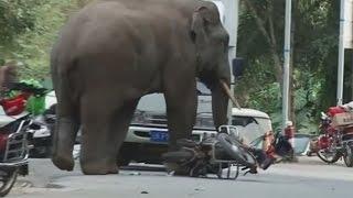 'Heartbroken' elephant destroys cars in a Chinese village