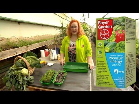 Bayer Garden Previcur® Energy– zelenina, přípravek proti padání klíčních rostlin a k dezinfekci půdy