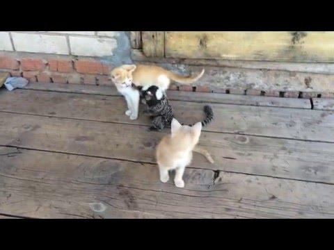 Белоухая игрунка Филя борется с котятами