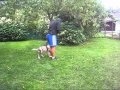 video One of the first dog...