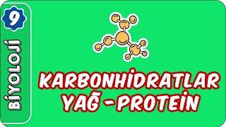 Karbonhidratlar, Yağ ve Proteinler  9. Sınıf Biyoloji