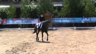 Конный спорт, выездка, соревнования