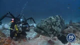Fiji's Diving Encounters