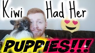 Kiwi had her puppies!!!