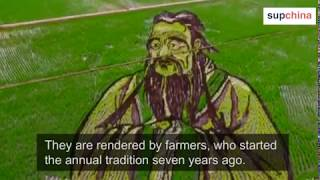 Amazing 3D drawings on a paddy field