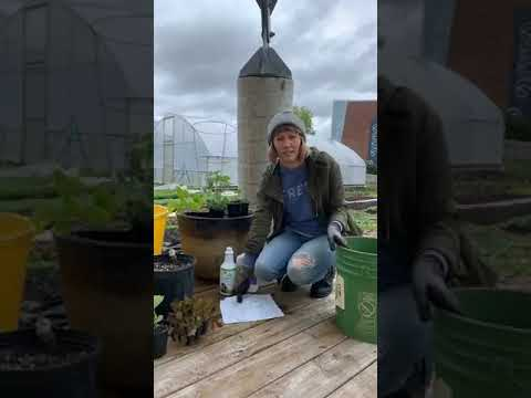 Urban Gardening with Growing Places Indy