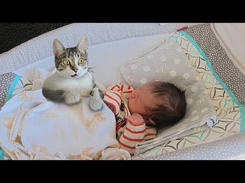 Cat Meeting Newborn Baby First Time – Curious Cat tries to befriend Baby Compilation