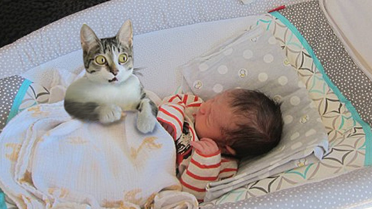 Cat Meeting Newborn Baby First Time Curious Cat tries to