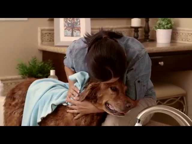 How to Give a Dog a Bath (Petco)