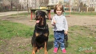 Baby Walking Dog VLOG Best Friends Rottweiler ВЛОГ Собака ротвейлер и ребенок