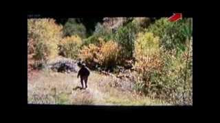охота в грузии видео