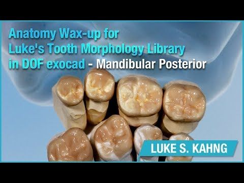 Anatomy Wax-up for Luke's Tooth Morphology Library in DOF exocad