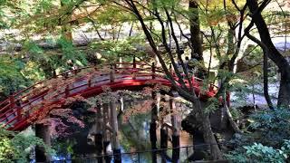 今高野山龍華寺の紅葉