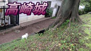 【群馬】高崎城へ行ってみた