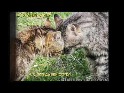 Прикольные картинки котов с надписями.