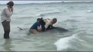 A Whale Beached Itself in Sanibel Island, Florida