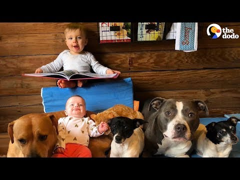 Furry Siblings Help Family Raise Two Babies | The Dodo