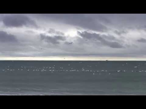 Gannetts fishing near our timeshare-Atlantic Beach NC