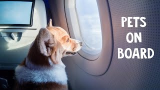 Travelling with pets on flights. Air India best petfriendly airlines in India?