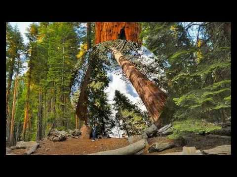 Top Place to Travel & Guides 2014 - Mariposa Grove