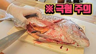 [ENGSUB] 참돔에서 쏟아진 수십 마리의 기생충, 고래회충(Anisakis)의 진짜 진실을 알려드립니다.