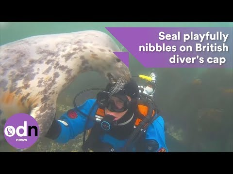 British diver has extremely close encounter with seal off Northumberland coast