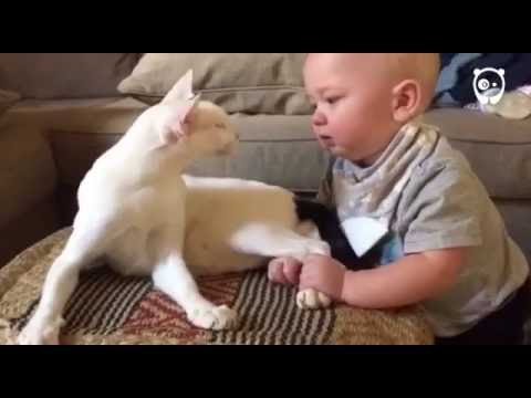 They were not sure how their adopted cat would react to their baby