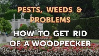 How to Get Rid of a Woodpecker