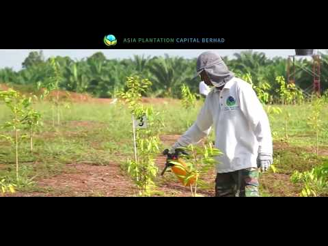 An Introduction to Asia Plantation Capital Berhad