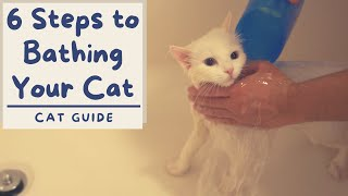 How to Bathe your Cat that Hates Water (6 Step Tutorial) | The Cat Butler