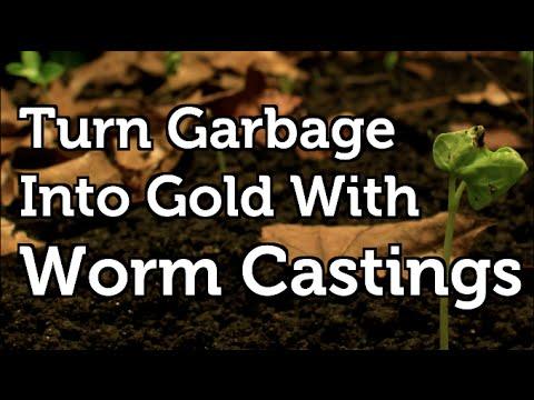 Worm Castings Turning Waste into Free Organic Fertilizer