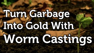 Worm Castings Turning Waste into Free Organic Fertilizer