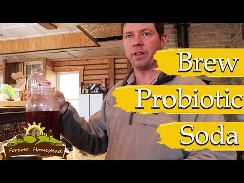 PROBIOTIC SODA  (Brewing Root Beer and Ginger Beer)