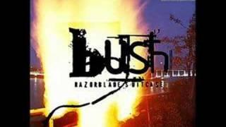 Bush Distant Voices Bootleg Rare
