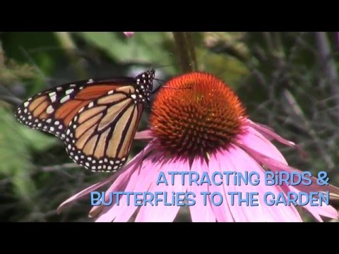 Attracting Birds and Butterflies to the Garden