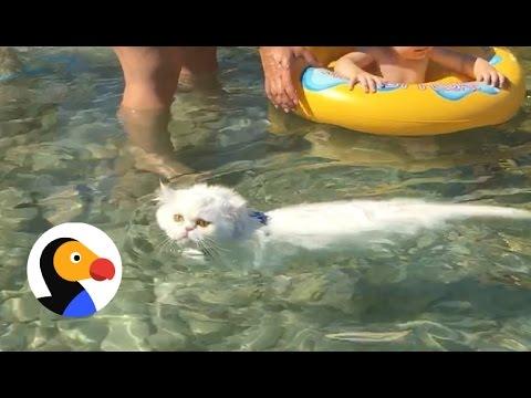 Cat Swims at the Beach   The Dodo