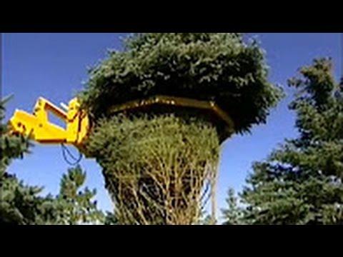 Групповые посадки кустарников и цветов на участке Larix