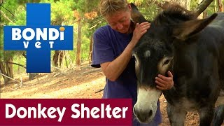 Life At A Donkey Shelter