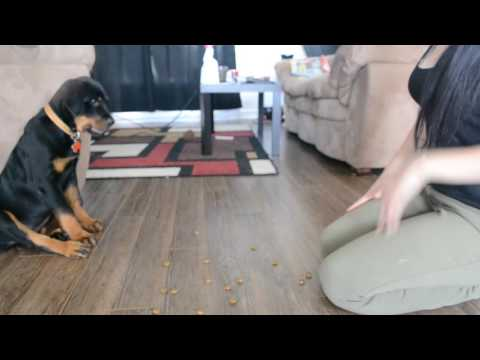 12 weeks rottweiler puppy training