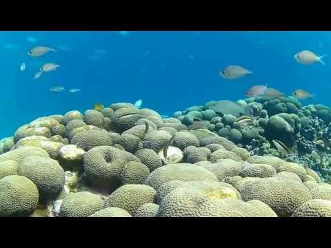 Snorkeling in Grenada Part 9 -- Carriacou