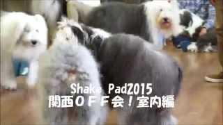 Shake Pad2015関西OFF会が琵琶ドッグで開催されました。 午...