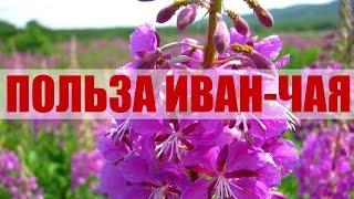 Иван-чай Польза(, 2015-10-02T17:34:24.000Z)