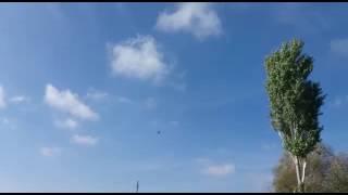 Erzurum kahraman lar mahallesi kuş sahibi Alparslan Engin