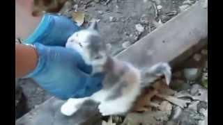 Homelesses kittens.  Бездомные котята.