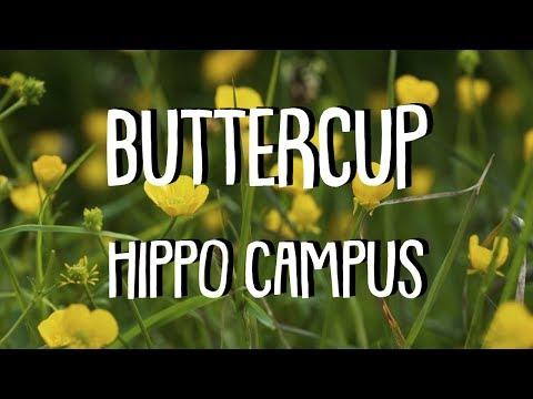 BUTTERCUP (Lyrics) || HIPPO CAMPUS