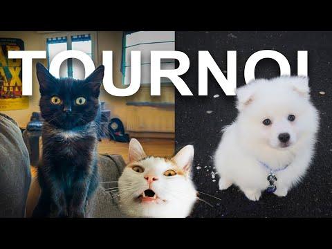 LE TOURNOI (Feat. TUBONIA) - PAROLE DE CHAT