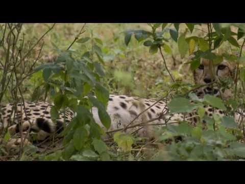 релакс Шопен красивая, успокаивающая музыкаиз YouTube · Длительность: 4 мин23 с  · Просмотры: более 2.999.000 · отправлено: 5-2-2012 · кем отправлено: 2012Iliya