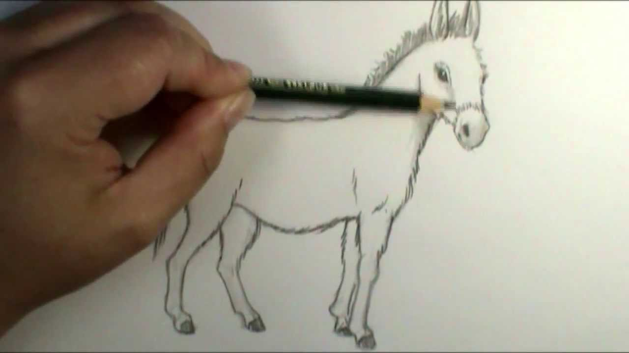 How To Draw A Donkey Plus Shading Intro!